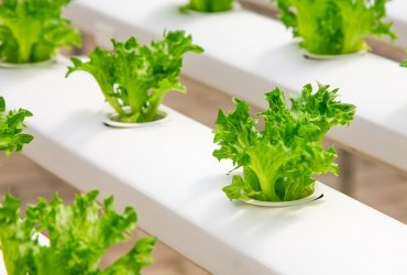 Asia's food industry will drive sustainable global nutrition